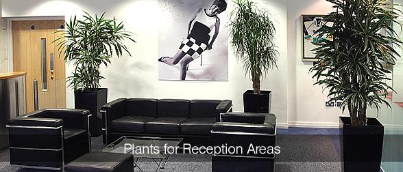 plantsreceptionareaMAIN